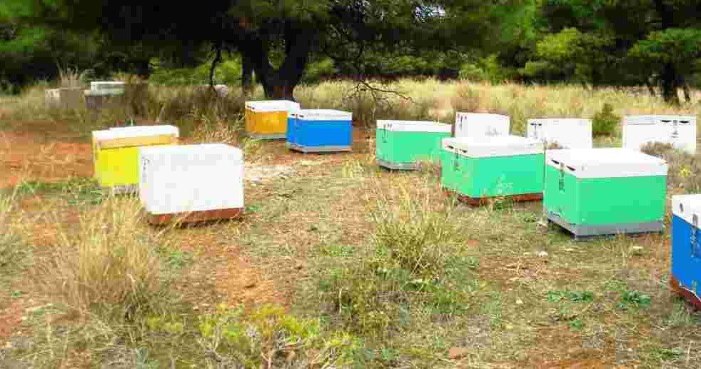 Άνοιξη ή Φθινόπωρο; Ποια η καλύτερη εποχή για να ξεκινήσετε τη μελισσοκομία.