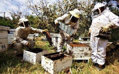 Μέχρι 20 Ιανουαρίου η δήλωση κυψελών διαχείμασης και αιτήσεις για τα προγράμματα στο Κέντρο Μελισσοκομίας Λάρισας
