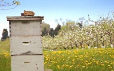 Νέα επιδοτούμενα μελισσοκομικά προγράμματα με ενίσχυση 25€ για αντικατάσταση κυψελών.