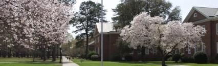 spring-walkway