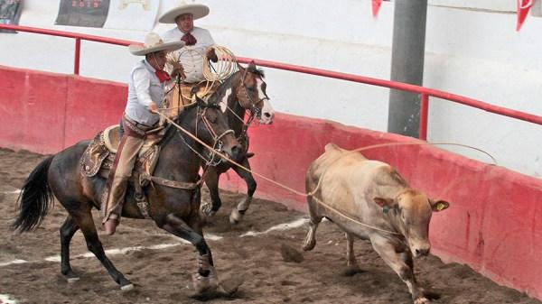 Francisco Bernal Navarrete, de Rancho La Necedad, rematando su lazo cabecero