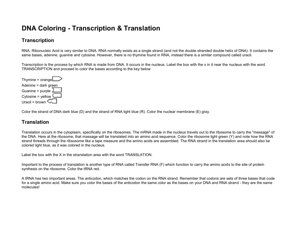 Transcription And Translation Coloring Worksheet Answers