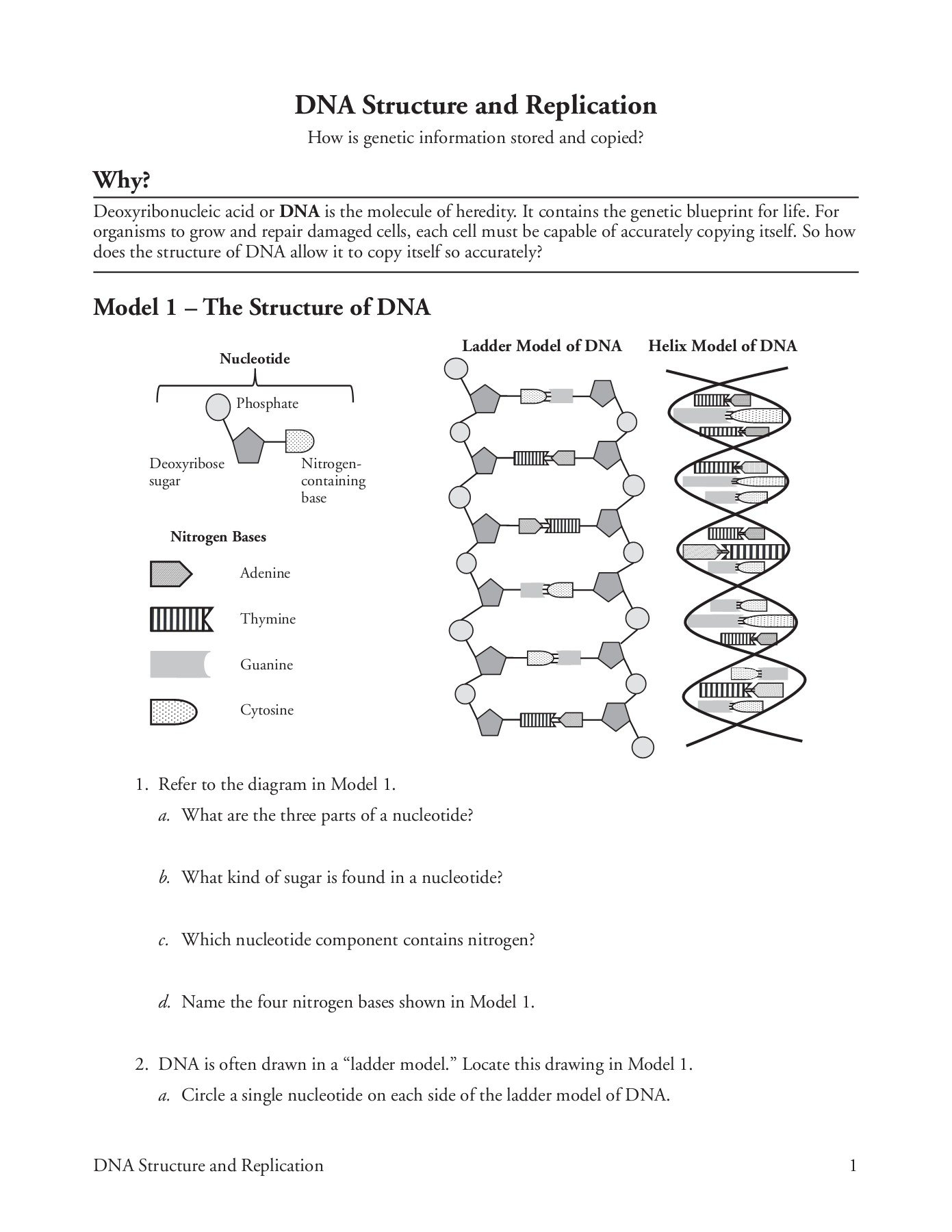 Dna Structure And Replication Worksheet Answer Key