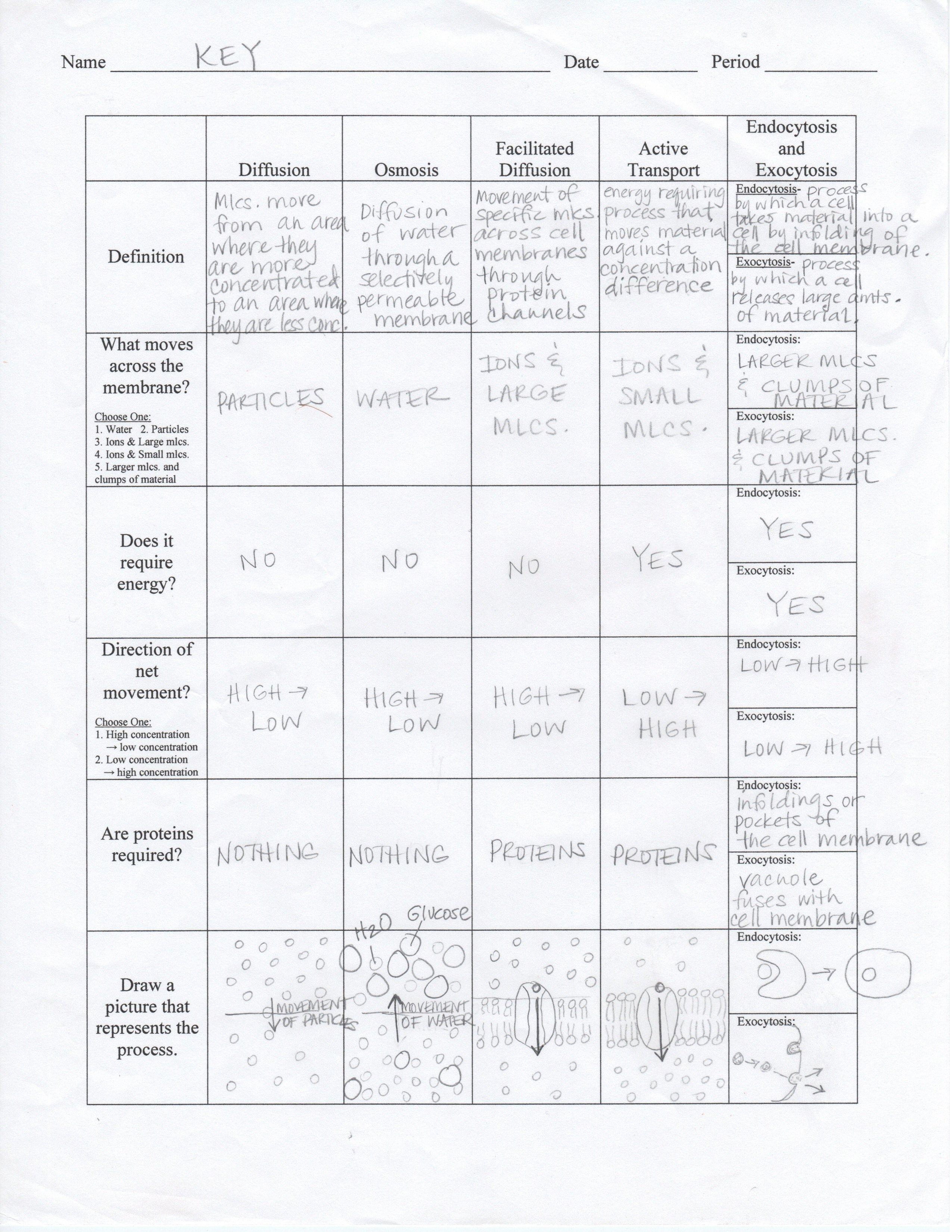 Cellular Transport Worksheet Section A Cell Membrane