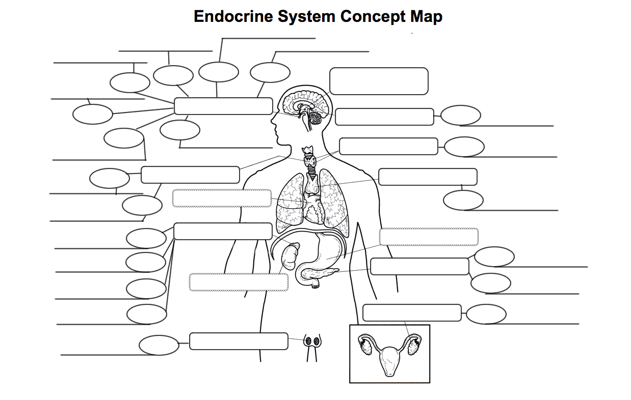 Endocrine System With Human Endocrine Hormones Worksheet