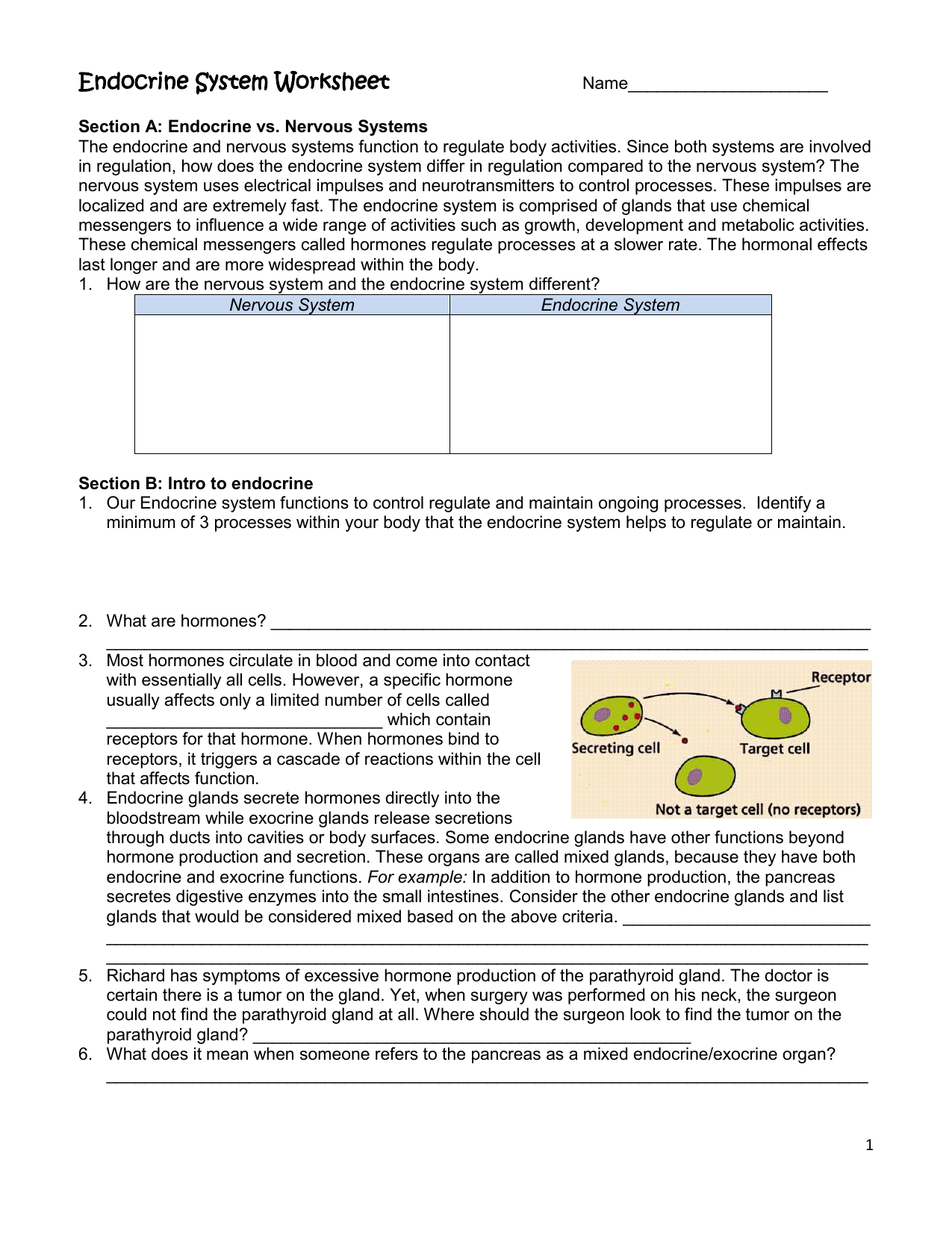Endocrine System Worksheet