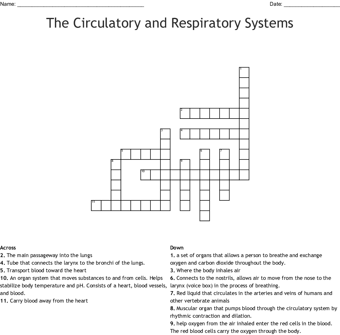 Circulatory And Respiratory System Worksheet