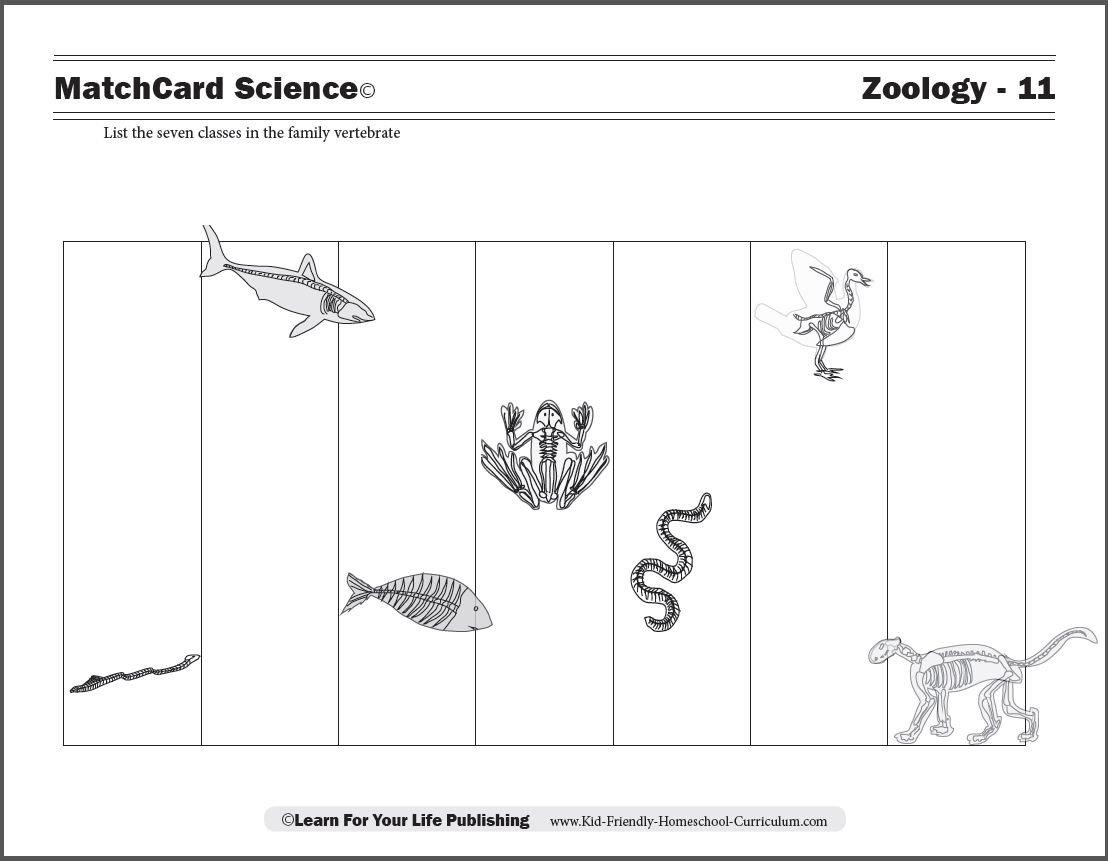 Animal Classification Worksheet