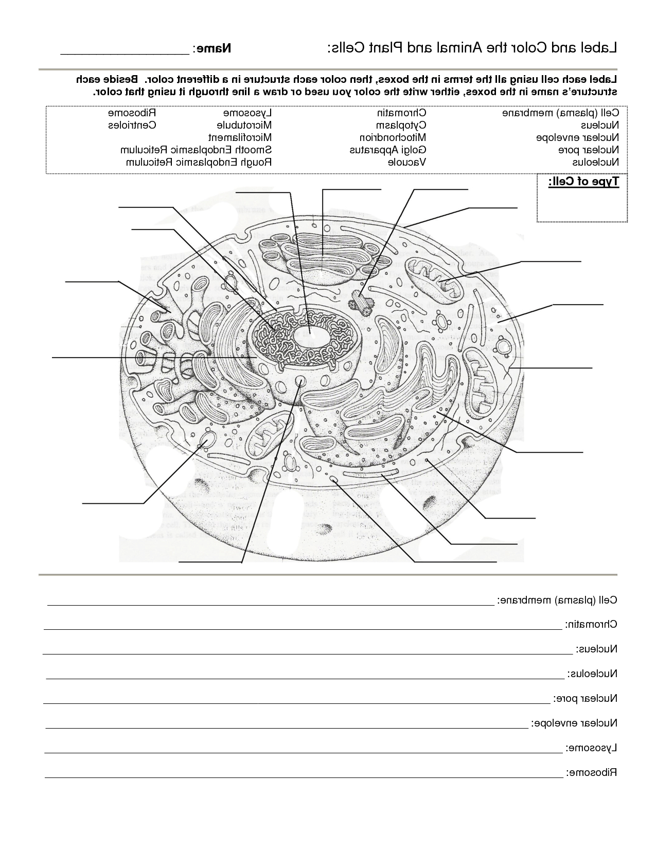 Animal Cell Worksheet Labeling