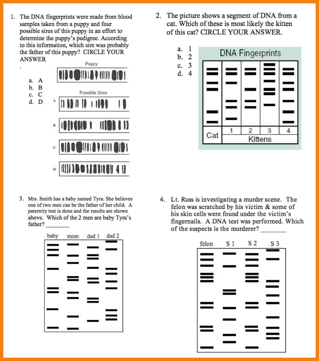 Dna Fingerprinting And Paternity Worksheet Answer Key