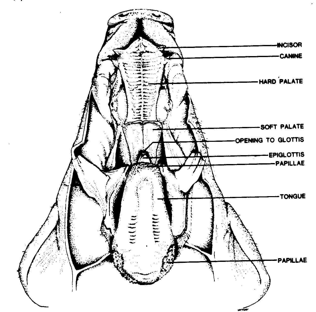 Fetal Pig Dissection Pre Lab Worksheet