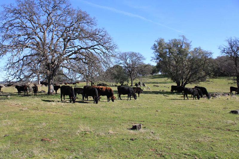 ranch9 (5)