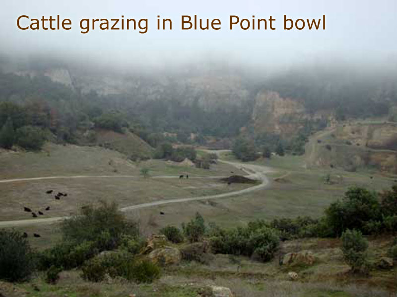 bluepoint (32)