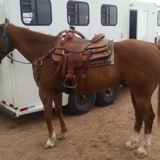 Equine Recurrent Uveitis (ERU)