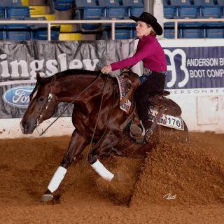 Mister Smarts Horseback Riding