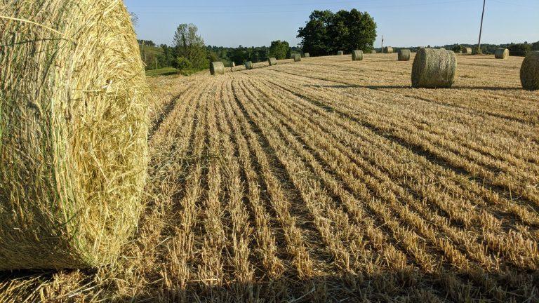 vitamin E Hay for Horses