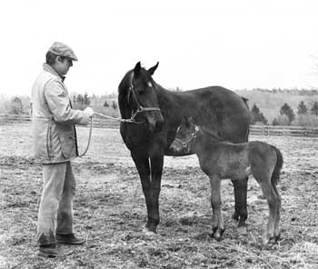 Akindale John Hettinger with Mare Foal