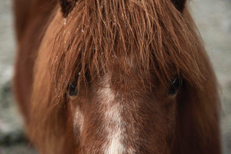 Mini Chestnut Horse