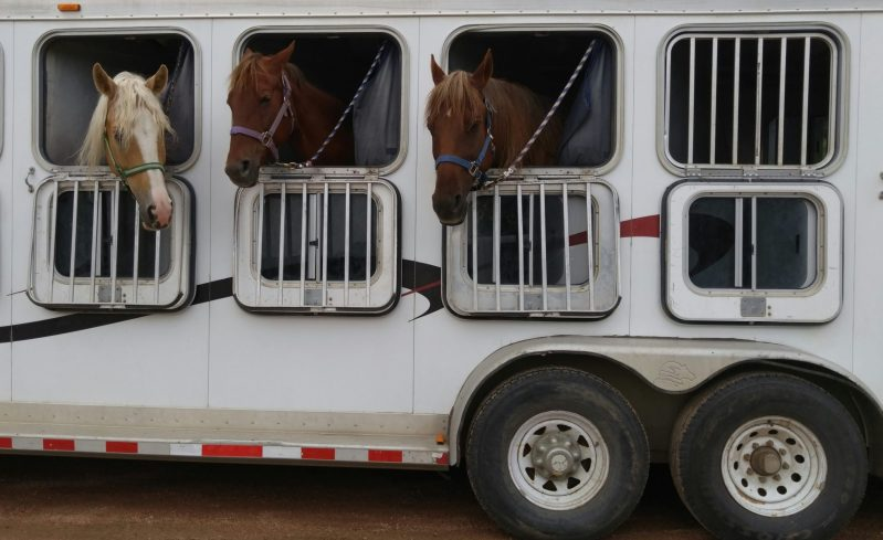 Horses in Trailer waiting to Drive