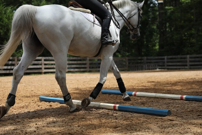 English Rider on an Excel Supplements Performance Horse