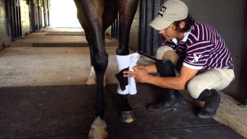 man wrapping horses leg