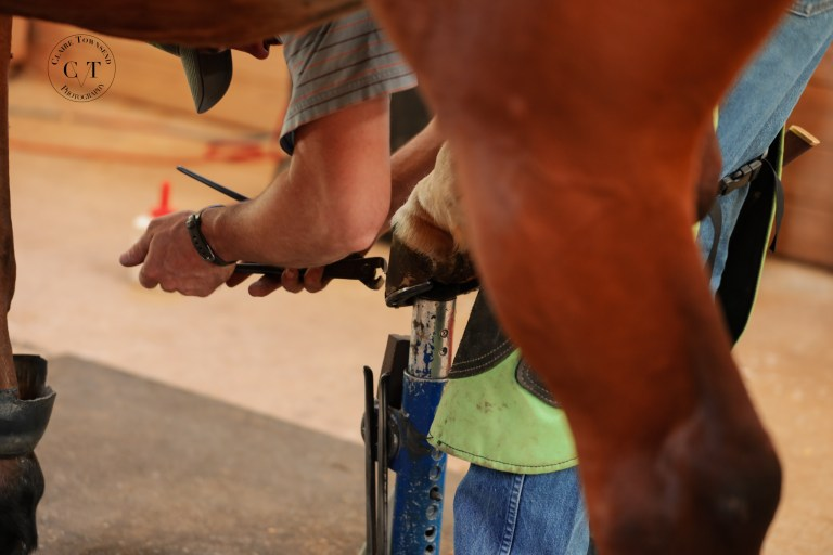 Cost of Owning a horse farrier work