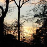 Lever de soleil sur le Bois de Boulogne