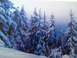 Grouse Mtn Christmas Copyright Shelagh Donnelly