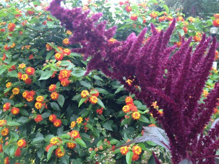 orange and purple border © Shelagh Donnelly