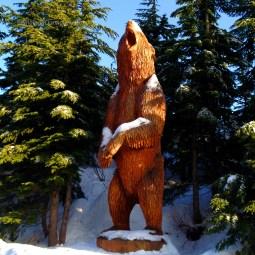 Grouse Mtn Bear 09772 Copyright Shelagh Donnelly copy