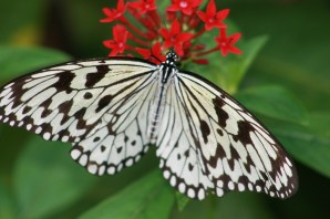 Fairchild Butterfly 3621 Copyright Shelagh Donnelly