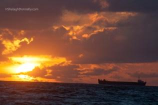 South Beach Sunrise 4045 Copyright Shelagh Donnelly