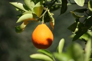 Orange 4836 Copyright Shelagh Donnelly
