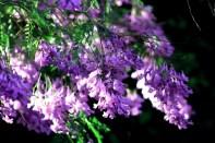 Arizona Bilrmore Floral 4856 Copyright Shelagh Donnelly