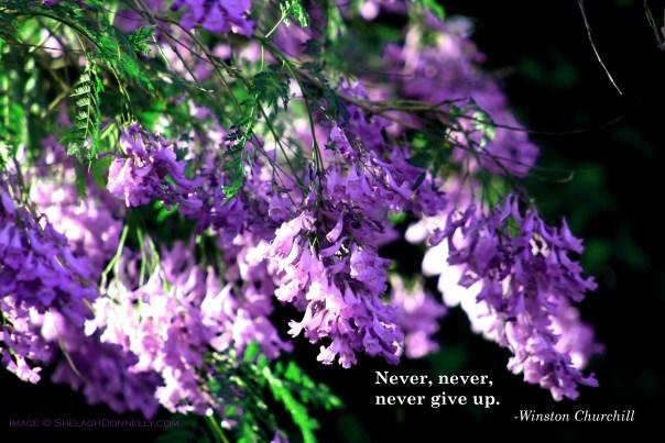 Phoenix Floral 4856 Copyright Shelagh Donnelly