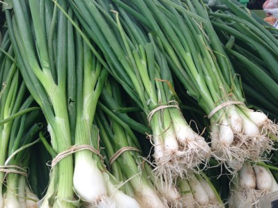 Green Onions 1161 Copyright Shelagh Donnelly