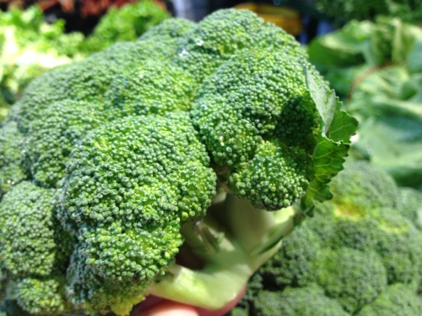Broccoli Copyright Shelagh Donnelly