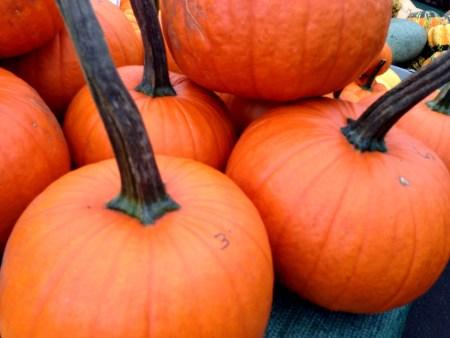 Pumpkins Copyright Shelagh Donnelly