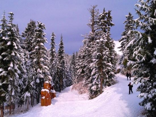 Grouse winter wonderland