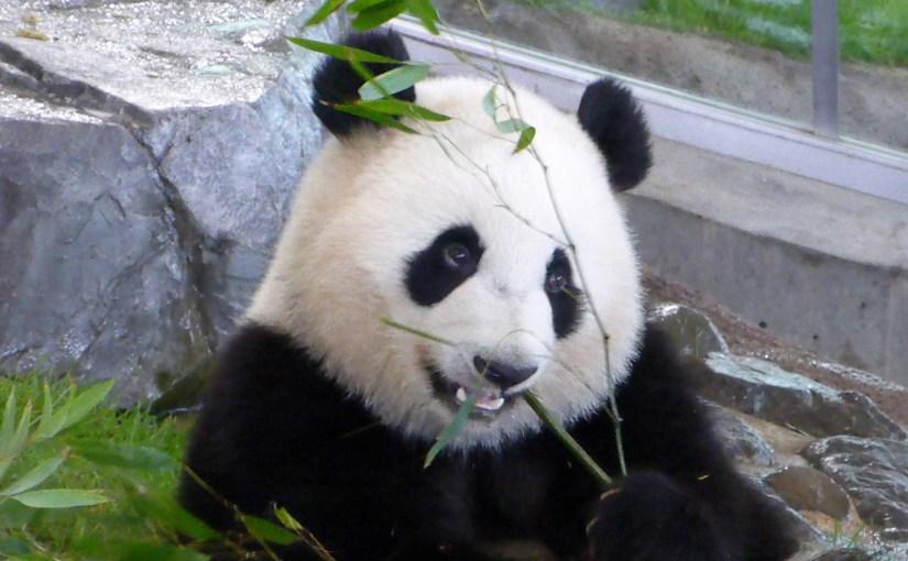My Panda Moments: Adventure World Japan