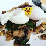 #BlackboardSpecial #breakfast with #poachedeggs #mushrooms #haloumi at #bluetrufflegourmetdeli  #travel #instatravel #instagood #foodporn #breakfastporn #instafood #instafoodie #rockhampton #visitcapricorn #queensland #glutenfree
