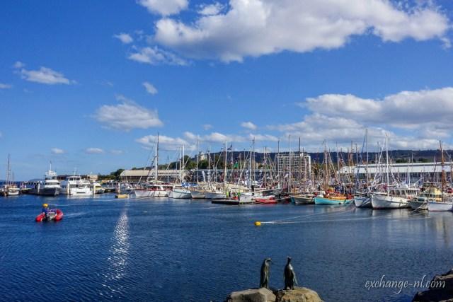 塔斯曼尼亞荷伯特憲法碼頭/維多利亞碼頭 Constitution Dock/Victoria Dock, Hobart, Tasmania