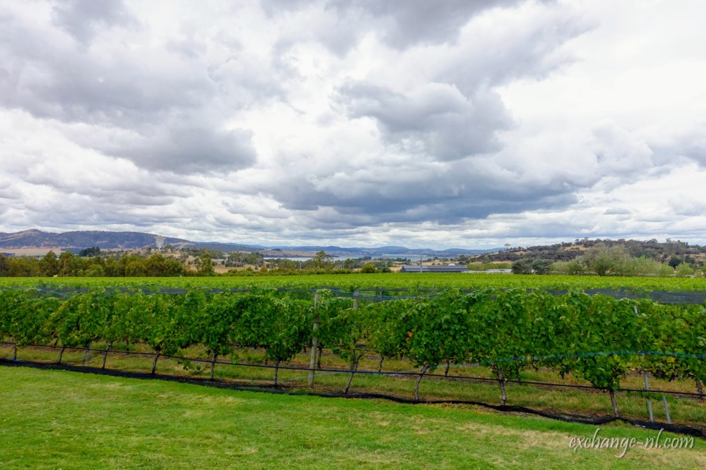 塔斯曼尼亞酒莊Frogmore Creek Winery, Tasmania