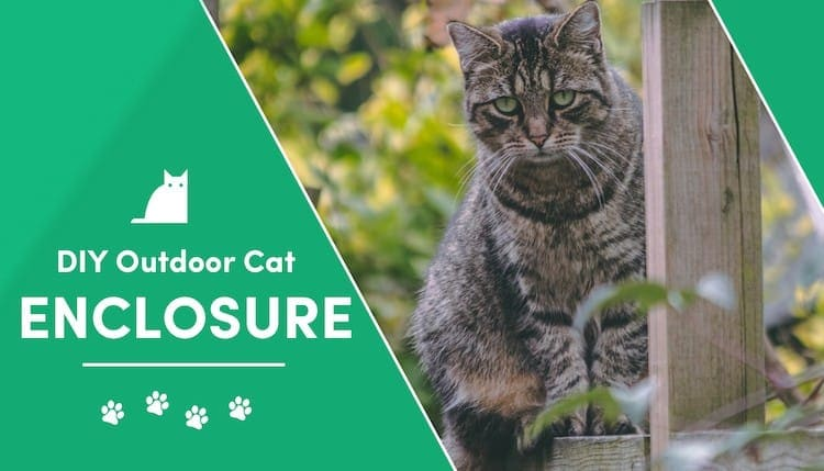 10 diy outdoor cat enclosure plans you