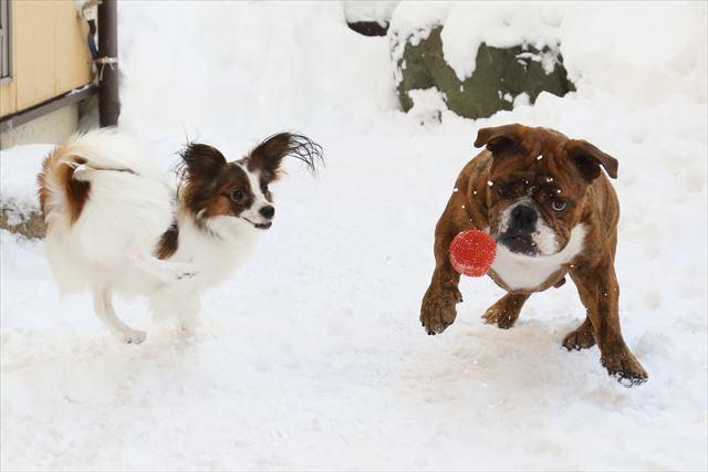 snow-dogrun010