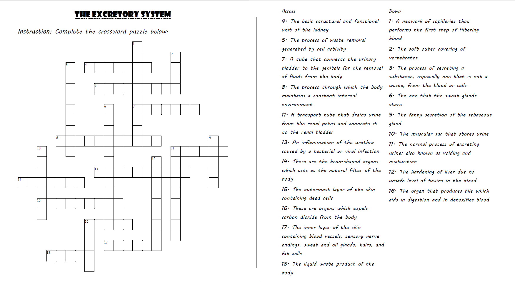 Skeletal System Crossword Puzzle Key