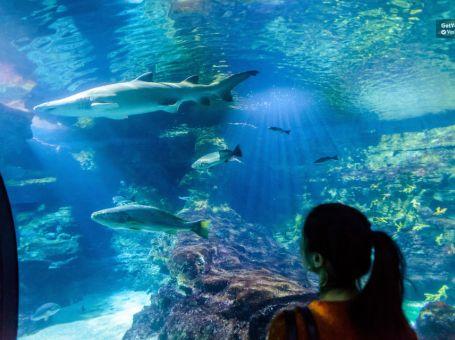 Entradas para el Aquarium de Barcelona