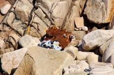 Les restes d'un bateau dans les rochers de la Pointe de Primel
