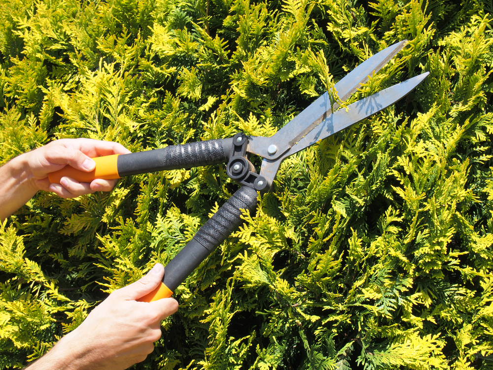Top 4 Hedge Care Tips  Law Care Services Blog From