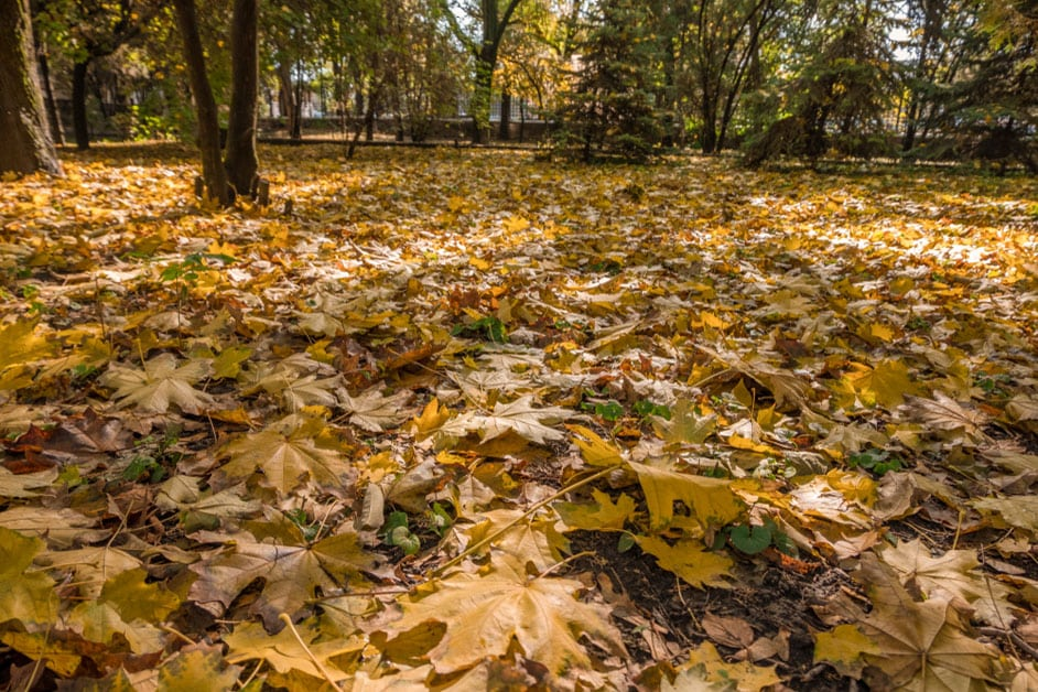 Fall Leaves and Your Lawn Maintenance  Executive Lawn Care